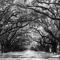Sunny Southern Day - Black And White Photograph by Carol Groenen - Sunny Southern Day - Black And White Fine Art Prints and Posters for Sale