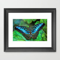 BUTTERFLY BLUE Framed Art Print by catspaws
