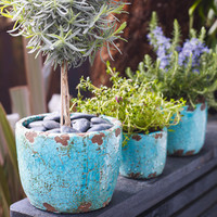 Turquoise Plant Pots, Accessories | Graham and Green Kitchen