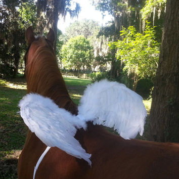 Horse Wings -- White or Black Feathered Wings for Horse or Pony -- Pegasus, Equine Angel, Flying Horse Costume