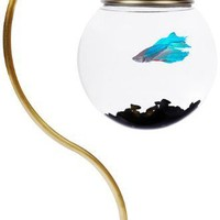 Unusual Fish Tanks - OpulentItems.com