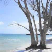 Dead Tree By The Sea Photographic Print