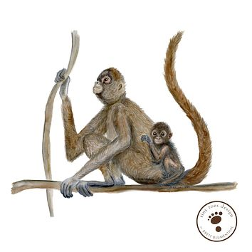 Mom and Baby Spider Monkey Print