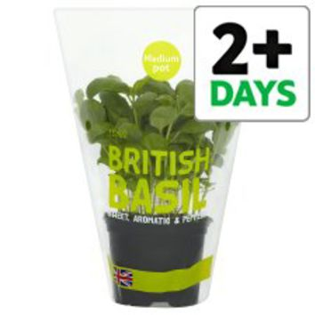 Tesco Basil Medium Pot - Groceries - Tesco Groceries
