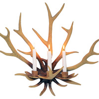 Antler Wall Sconce, Natural, Antlers, Horns, Taxidermy & Faux-Taxidermy