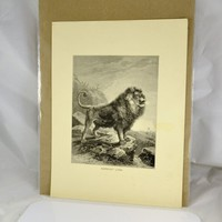 Barbary Lion Wood Engraved Print  1880s Animate Creation Antique Victorian Era - Ready to Mat and Frame