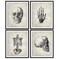 Vintage Anatomy Art Print Skull, Rib Cage, Hand Skeletal, Bone, Human Anatomy Set of Four 5x7, 8X10, 11x14 Medical Science Doctor Wall Decor