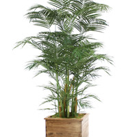 8' Deluxe Areca Palm in Square Stained Wooden Planter
