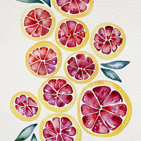 Sliced Grapefruits Watercolor by Cat Coquillette