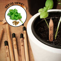 Sprout Pencils (Box of 8)