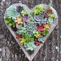 Succulent Heart Living Vertical Planter
