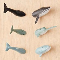 Whale Magnets Set
