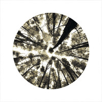 Tree Photography, Looking Up Trees, Tall Trees, Woodland, Forest, Sepia Photo, LIMITED EDITION Circle Photo, Open Edition 8 x 8 Square Photo