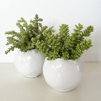 Made to Order - Succulent Plants, Set of Two - Artificial, White, Green, Succulent Arrangement