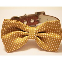 Mustard polka dots dog bow tie collar, Pet wedding accessory
