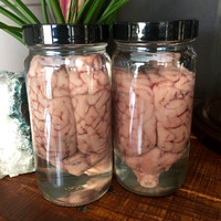 Preserved Sheep Brain