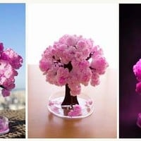 DX Beautiful Flower Tree ~ Magic Sakura Tree (Cherry Blossom)