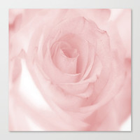 Pale Pink Rose Canvas Print by kasseggs