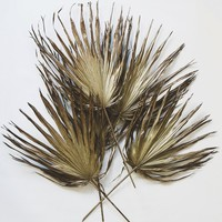 Pack of 5 - Dried Palm Leaves in Gold Bronze