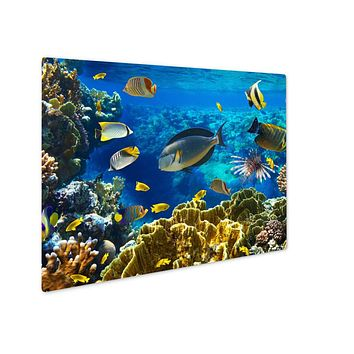 Metal Panel Print, Photo Of A Tropical Fish On A Coral Reef