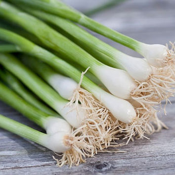 100 Onion Small Chives Edible Shallot Scallion Red Bunching Vegetables Seeds Easy Growing