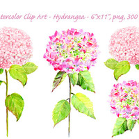 hand painted watercolour pink hydrangea digital clipart printable instant download scrapbook watercolor cards invitation