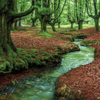 Wall MURAL forest brook stream river trees decole/