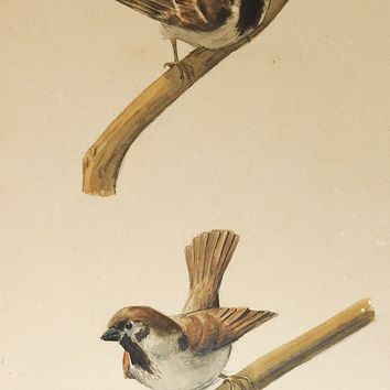 1908 Watercolor Bird Study Painting