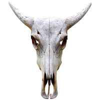 Traditional Bull Skull Wall Decal