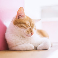 Cute Sleeping Cat Instant Digital Download Art Photography Printable, pink pastels home decor for cat lovers, animal photography