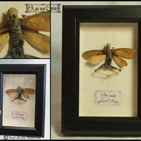 Dried fairy dead in small frame glass mommified dried fairy skeleton