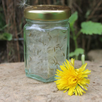 Fairy Wishes, dandelion clock seeds for sympathetic magic, make a wish, magic spells, folk magic, hedgewitch, real seeds, dried seeds,