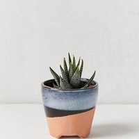 """Adara 3"""" Planter 