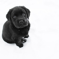 Puppy In The Snow Photograph by Larry Marshall - Puppy In The Snow Fine Art Prints and Posters for Sale