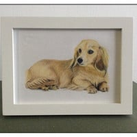 Original coloured pencil drawing - Honey Dachshund 5 by 7 inch drawing piece