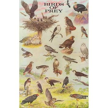 Birds of Prey Avian Raptors Poster 21x33