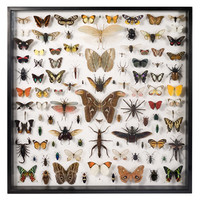 Museum Quality Insects Collection - Insects and Butterflies