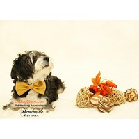Mustard Dog Bow Tie attached to dog collar, Pet accessory, wedding ideas