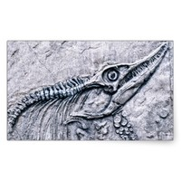Toothy Fish Fossil