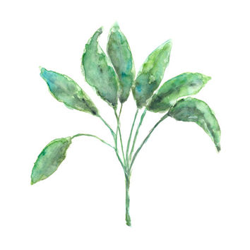 herb painting, kitchen decor, sage painting, sage herbs, botanical art, green decor, abstract watercolors, herb art, herb painting, 8X10