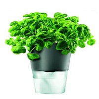 Eco Design Self Watering Plant