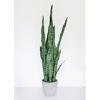 Fake Potted Snake Plant in Cement Pot - 37.5""