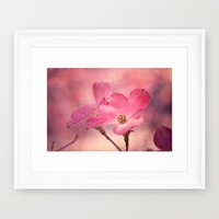 Colors of Spring: Pink Dogwood Framed Art Print by Legends Of Darkness Photography