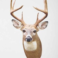 Walls Need Love White Tail Deer Mount Wall Decal- Taupe One