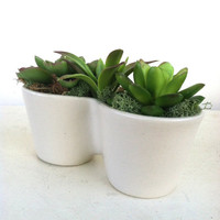 Artificial Succulent Arrangement ~ Double Planter Minimalist Unique Faux Plants Green