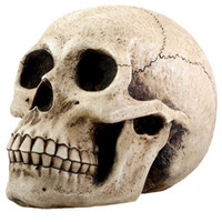 Anatomical Realistic Skull Money Bank Statue