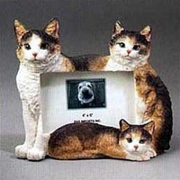 Calico Cat Picture Frame
