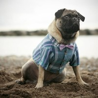 Supermarket - Arbour Shirt & Bow Tie (xs - xxl) from Rover