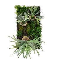 Living Wall | Potted Plants & Trees | Botanicals & Plants | Accessories | Decor | Z Gallerie
