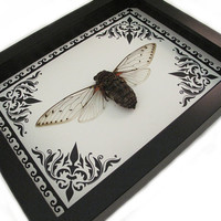 Nature Home Decor Nature Art Cicada Framed Insect Display
